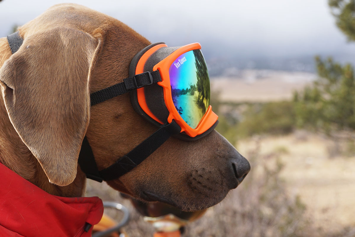 [Review] Cruising in Comfort: Rex Specs Dog Goggle ...