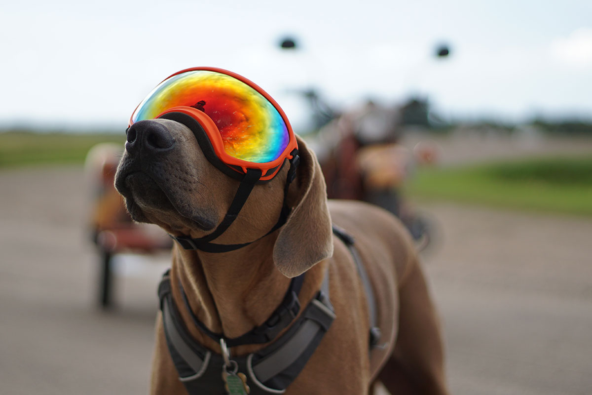 [Review] Cruising in Comfort: Rex Specs Dog Goggle – Adventure Rig